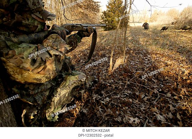 Turkey Hunter Aiming At Turkeys