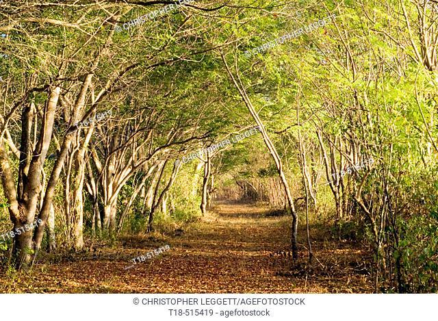 Leafy walkway through forest, Gili Nanggu, Indonesia