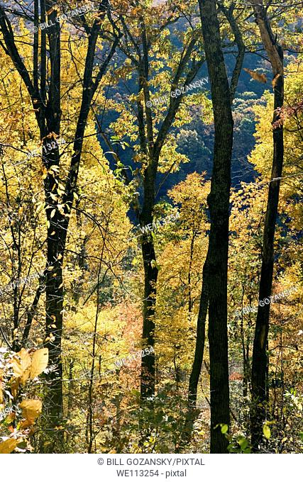 Fall Tree Patterns - Blue Ridge Parkway, near Asheville, North Carolina USA