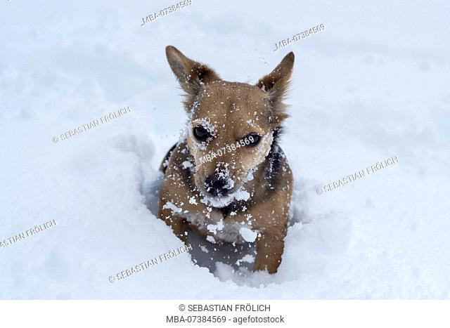 Little dog playing in the snow