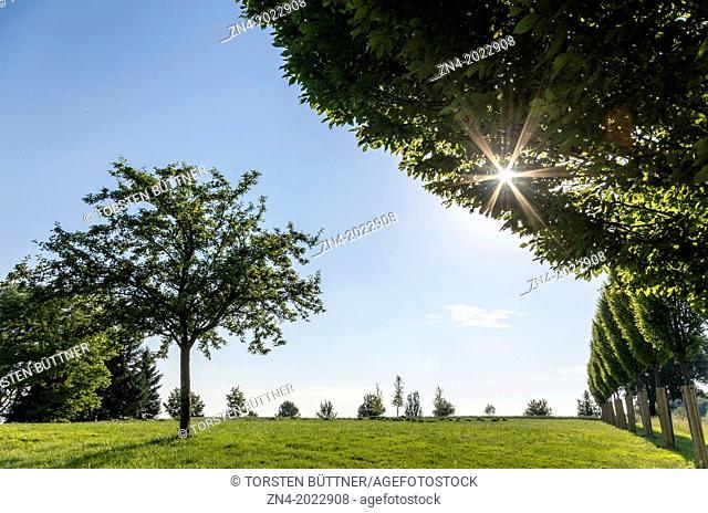 Single Tree and Sinking Sun on Magdalena Hill, Bad Schallerbach, Austria