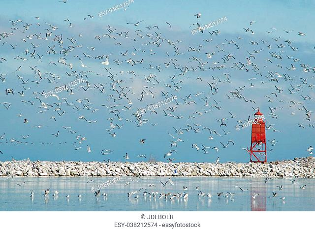 A mass of gulls fly into the air over a winter Lake Michigan harbor