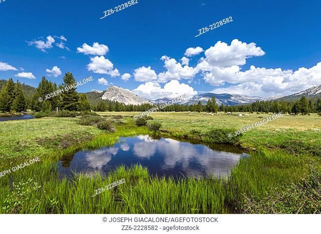 Clouds reflecting off of pond at Tuolumne Meadows. Yosemite National Park, CA, USA