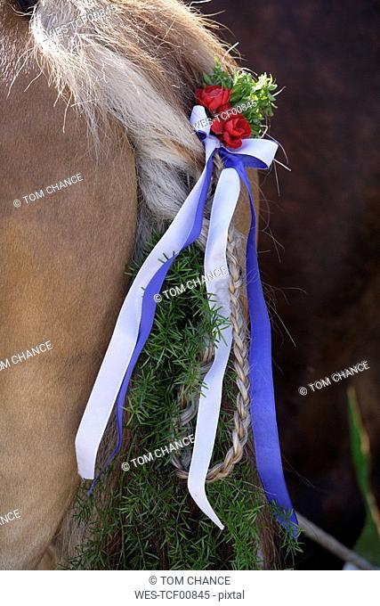 Germany, Bavaria, Penzberg, Horse wearing decoration on tail, close-up