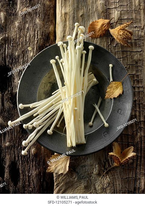 Fresh picked cultivated Enokitake, Enokidake or Enoki (Flammulina velutipes) commonly known as golden needle mushroom or lily mushroom, an edible mushroom