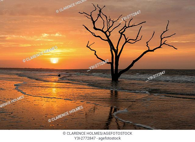 The sun rises over a lone dead oak tree on the beach in Botany Bay Plantation WMA on Edisto Island, South Carolina