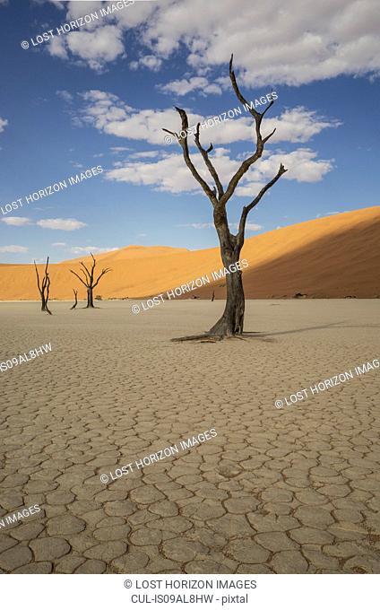 Dead trees on cracked clay pan, Deaddvlei, Sossusvlei National Park, Namibia