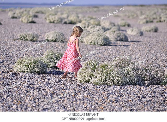 LITTLE GIRL WALKING NEAR CHOUX MARINS, PROTECTED ZONE IN THE BAY OF SOMME, CAYEUX-SUR-MER, SOMME, FRANCE
