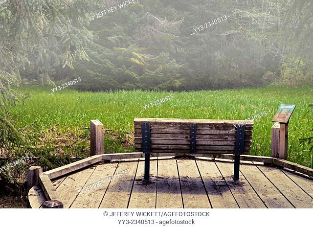 Bench along wooden walkway at Starrigavan camp ground, Tongass National Forest, near Sitka, Alaska
