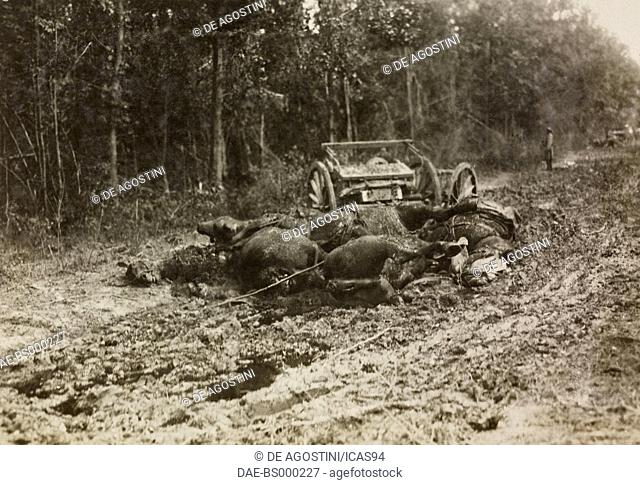 An Italian cart with artillery hit by the enemy, a group of dead horses, World War I, Italy, 20th century. Milan, Museo Nazionale della Scienza e della Tecnica...