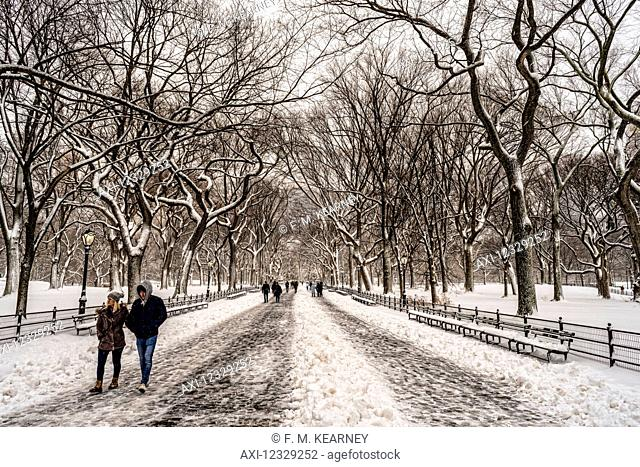 Snow-Covered Trees In The Mall, Central Park; New York City, New York, United States Of America