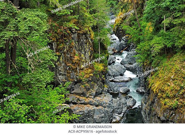 Quiet pool in the Englishman River , Englishman River Falls Provincial Park British Columbia Canada