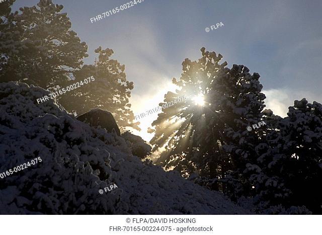Sunlight filters through trees, Sun rays God rays, light, early morning,sunbeams,daylight, sunshine