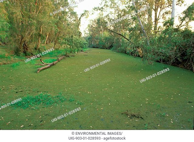 River choked with aquatic plants