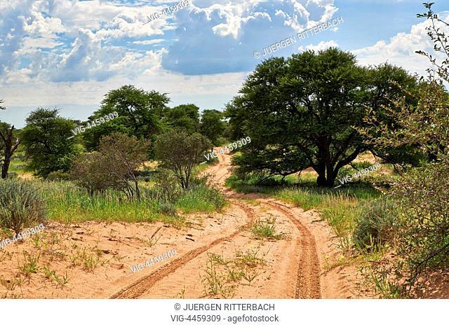 4x4 road in Kgalagadi Transfrontier Park, Mabuasehube Section, Kalahari, South Africa, Botswana, Africa - Kgalagadi Transfrontier Park, South Africa, Botswana