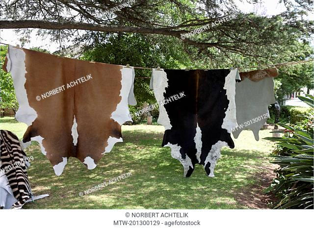 Animal skins hanging to dry, Franschhoek, South Africa