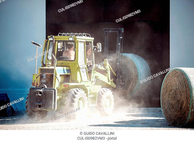 Harvesting tractor loading haystacks in barn