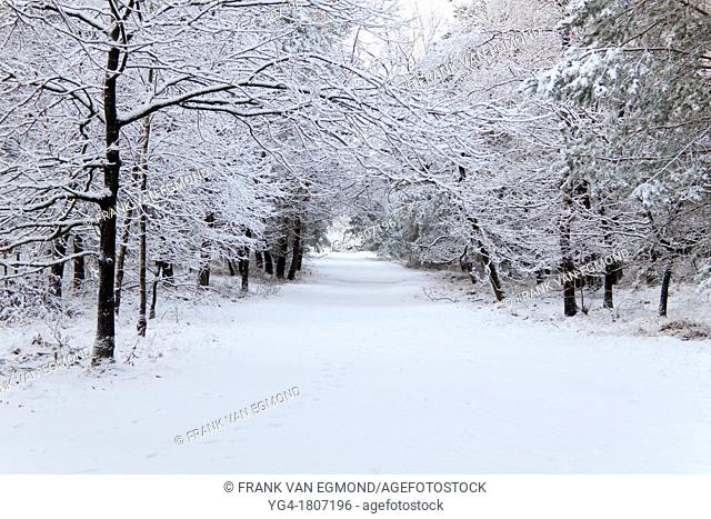 Untouched snow in a forest road