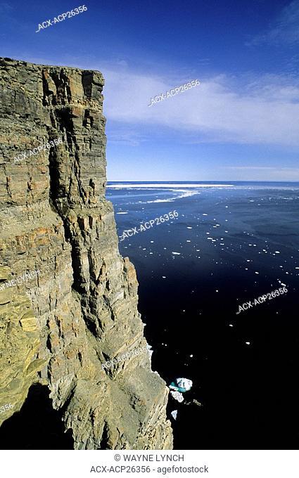 Thick-billed murre Uria lomvia nesting cliffs on Prince Leopold Island, Lancaster Sound, Nunavut, Arctic Canada