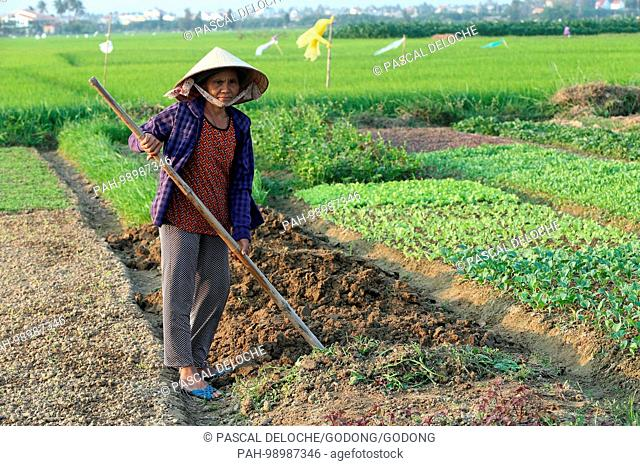 Vietnamese woman digging soil with the hoe in the vegetable field. Hoi An. Vietnam. | usage worldwide. - Hoi An/Quang Nam/Vietnam