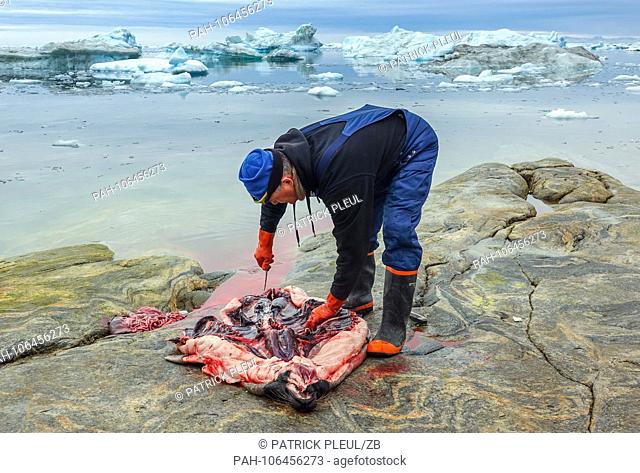 21.06.2018, Gronland, Denmark: On the 21st of July, a man shot a seal and slugged it on a rock in the coastal town of Ilulissat in western Greenland