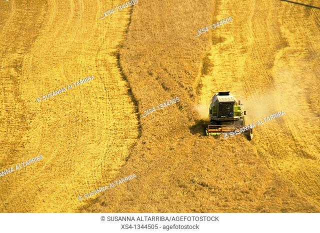 Harvest of corn at view of eagle, photo taken in Solsonès, Lleida, Spain, Europe
