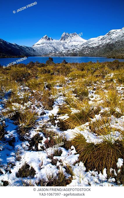 Australia, Tasmania, Cradle Mt - Lake St Clair National Park  Native bush near Lake Dove and Cradle mountain, covered by a fresh snowfall