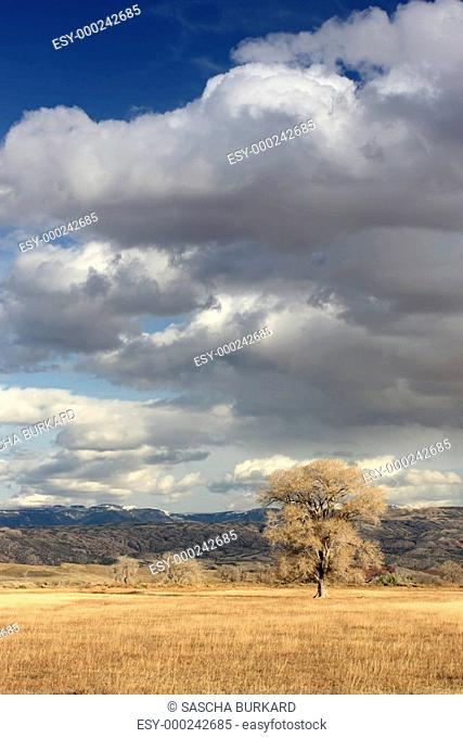 lone tree on field in wyoming