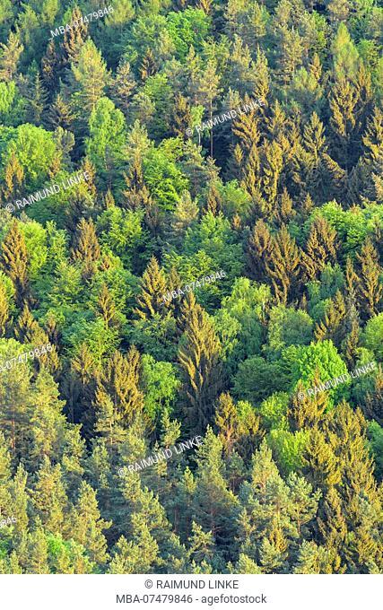 Forest in spring, Busenberg, Pfälzerwald, Dahner Felsenland, Südwestpfalz District, Rhineland-Palatinate, Germany