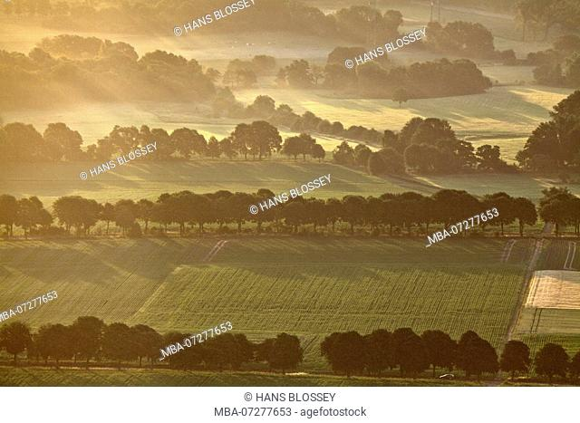 Aerial View, Buer, Bushes, Bush, Fields in Morning Mist, Hedges, Avenue, Morning Light, Gelsenkirchen, Ruhr Area, North Rhine-Westphalia, Germany, Europe