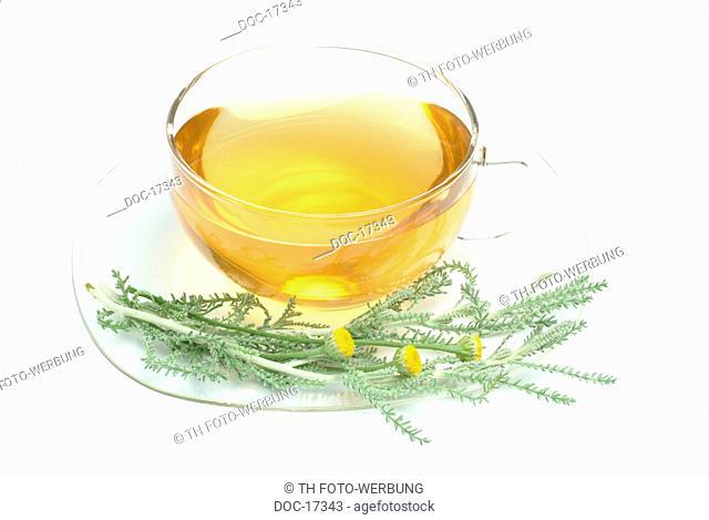 Lavender cotton - medicinal plant - herb - medicinal tea - Santolina chamaecyparisus - Cameciparisso - te - t medicinale