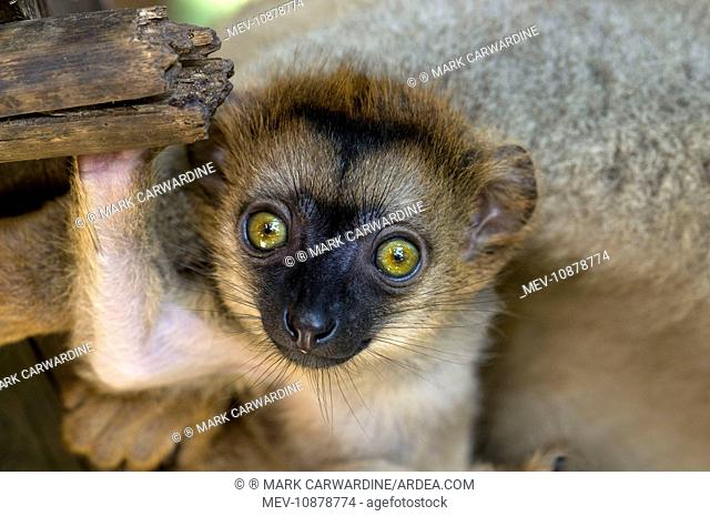 Northeast madagascar Stock Photos and Images | age fotostock