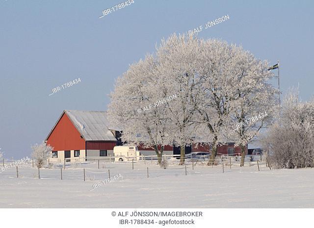 Farm in winter landscape, Skåne, Sweden, Europe