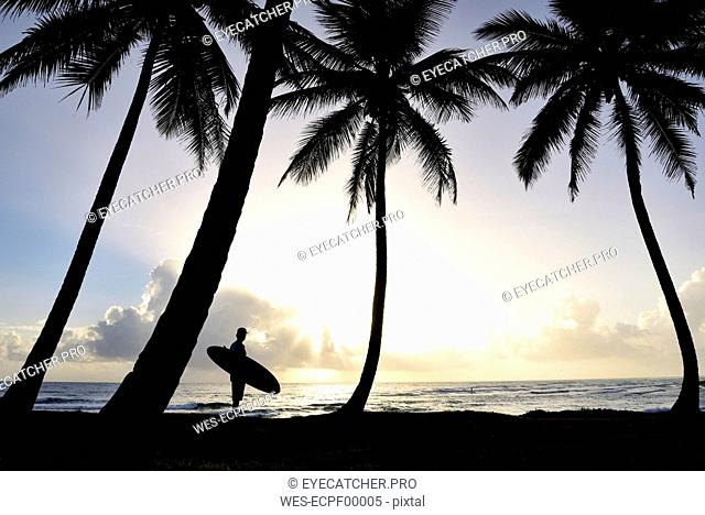 Dominican Rebublic, silhouette of palms and man with surfboard at sunset