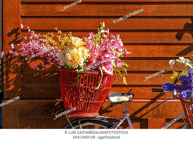 Still Life. Bicycle with Flowers against a red wood wall