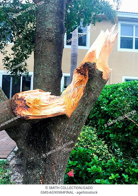 Snapped trunk of a thick tree, damaged during Hurricane Matthew, in West Palm Beach, Florida, October 7, 2016