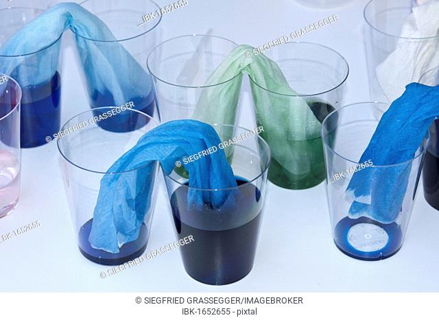 Demonstration of capillary action, capillarity, experiment with coloured water, plastic cups and paper towels