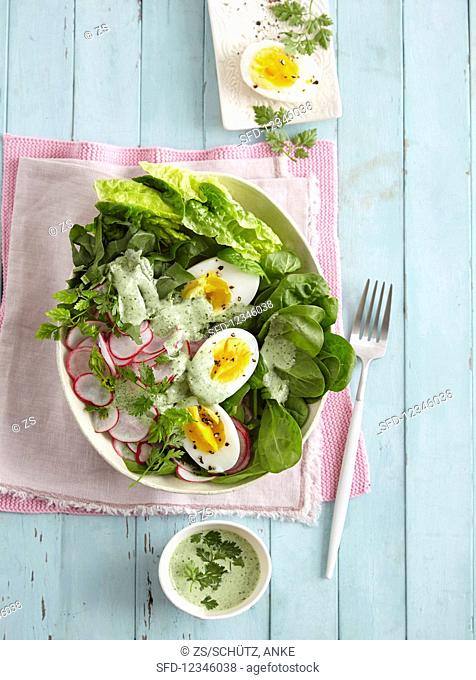 A spring salad with radishes, spinach, sorrel, and boiled eggs - 'spring awakening'