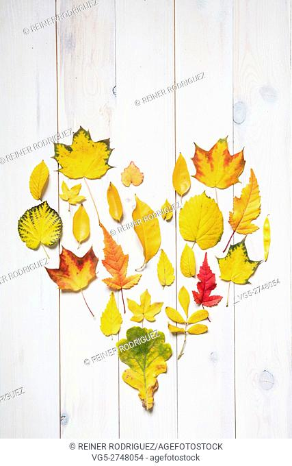 colorful autumn leafs in the shape of a heart. flat lay