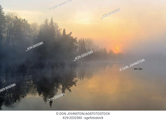 Sunrise at a foggy beaverpond, Greater Sudbury , Ontario, Canada