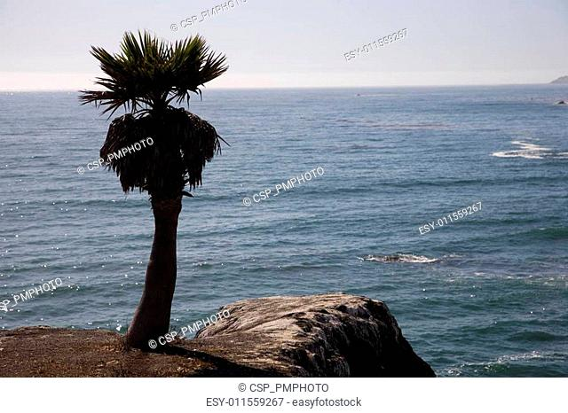 Palmtree at rocky coast