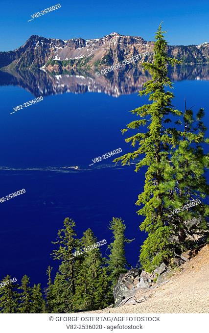 Crater Lake with mountain hemlock, Crater Lake National Park, Oregon