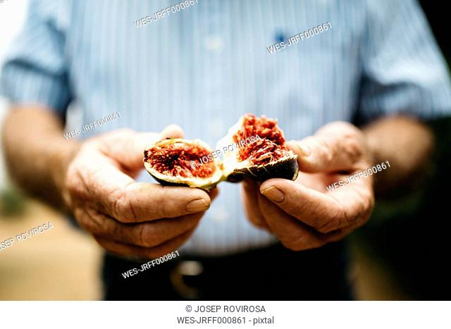 Hands of senior man holding fresh fig