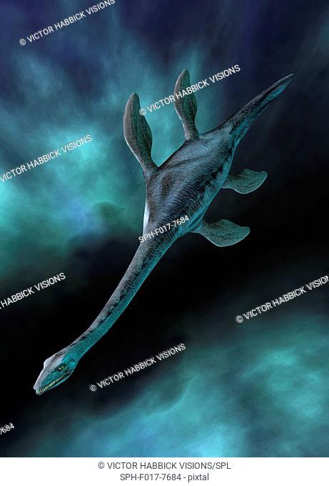 Plesiosaur illustration