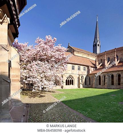 Cloister with minster, magnolia tree, cloister of Maulbronn, former Cistercian abbey, UNESCO world cultural heritage, Black Forest, Baden Württemberg, Germany