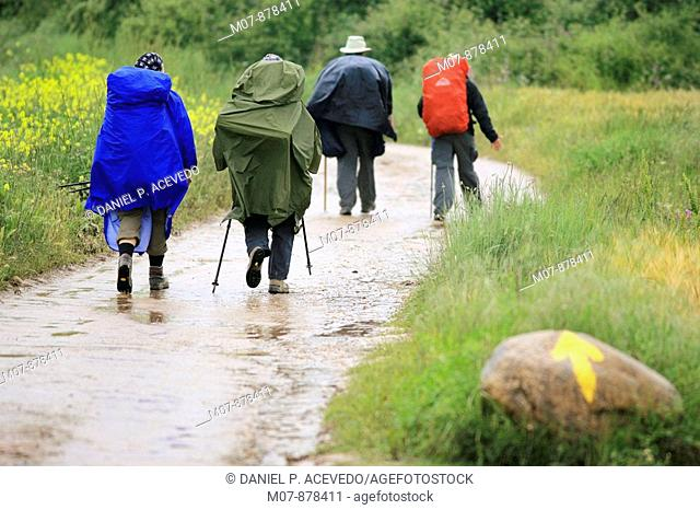 Pilgrims walked in the rain in Navarrete, La Rioja, Spain, EuropeRioja wine region