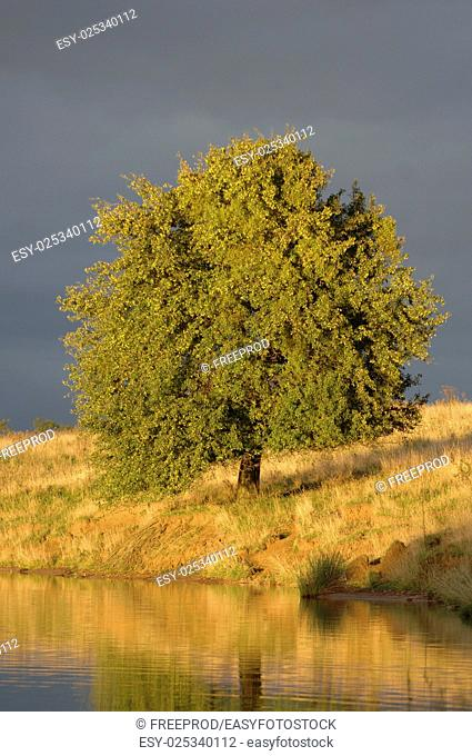 Tree, Storm and Rain over lake, France, France