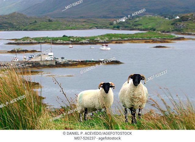 Letterfrack area. Connemara. Ireland