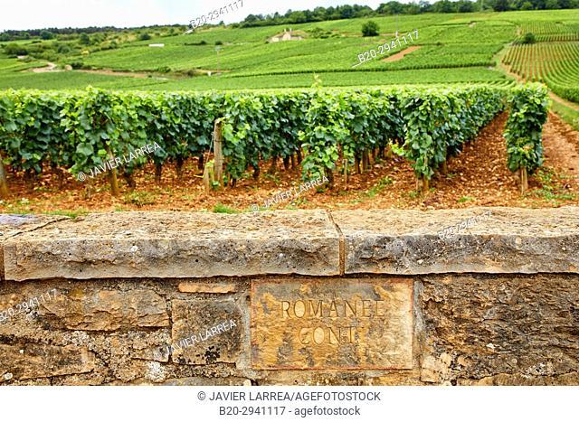 Pinot noir vineyards, Domaine de la Romanée-Conti, Vosne-Romanée, Côte de Nuits, Côte d'Or, Burgundy Region, Bourgogne, France, Europe