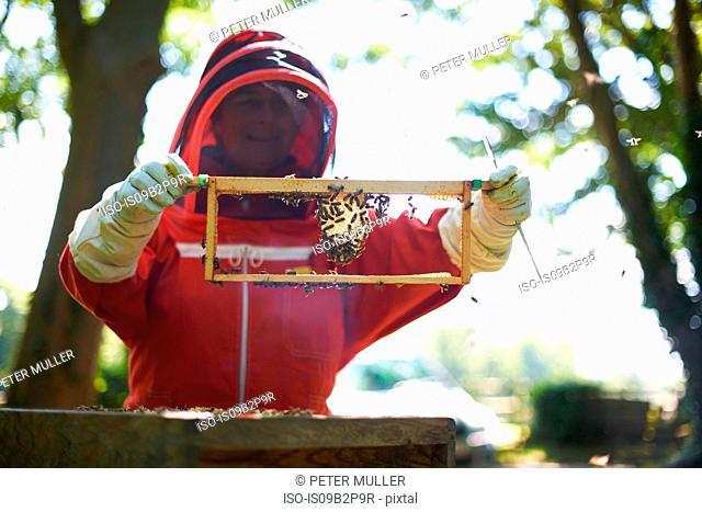 Female beekeeper holding hive frame